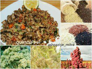 انواع غذا با کینوا و سبزیجات