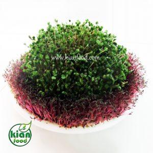 ایده های زیادی برای درست کردن سبزه های خلاقانه و زیبا وجود دارد که سبزه دو رنگ یکی از زیباترین ایده ها است. در این مطلب بهآموزش درست کردن سبزه دو رنگ ویژه نوروز پرداخته می شود.