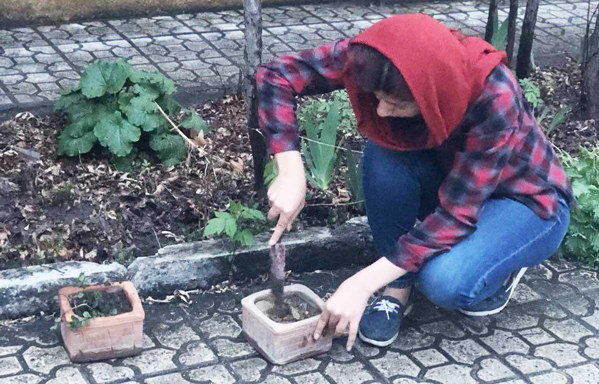 آموزش کاشت نعنا در گلدان