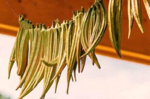 پودر بامیه